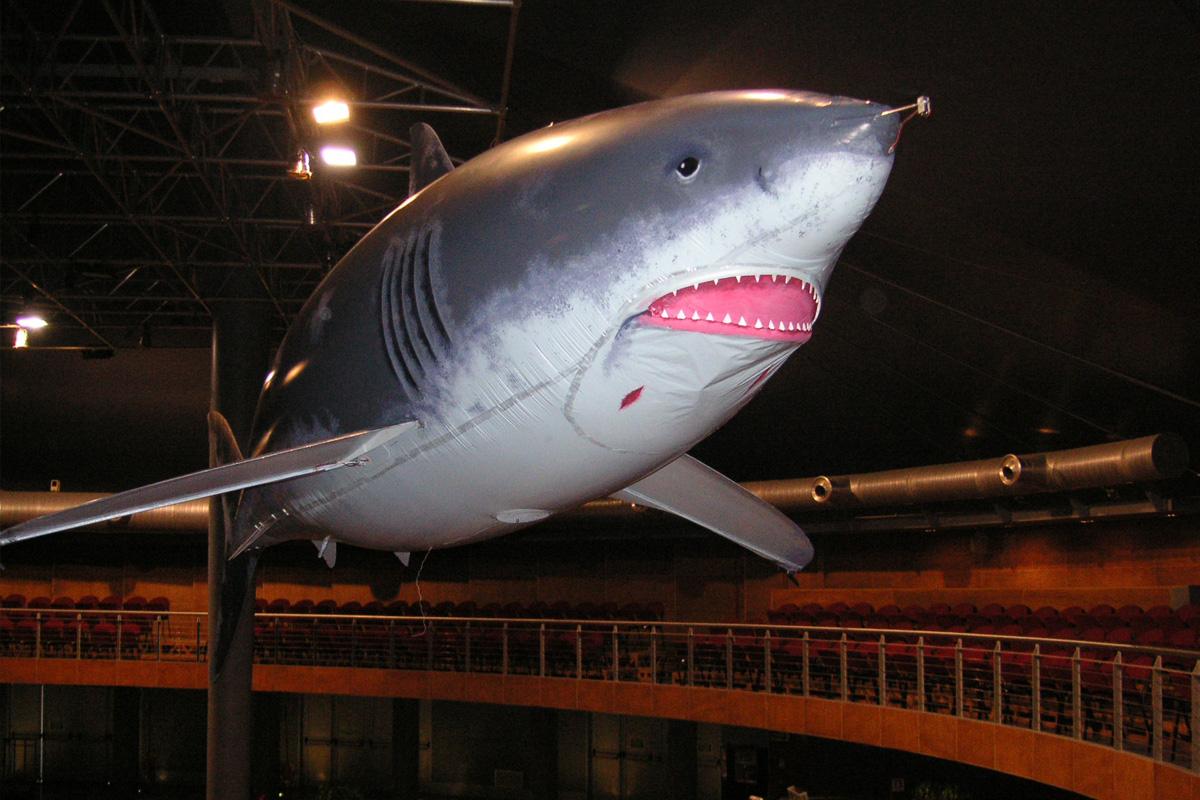 gal_shark_2