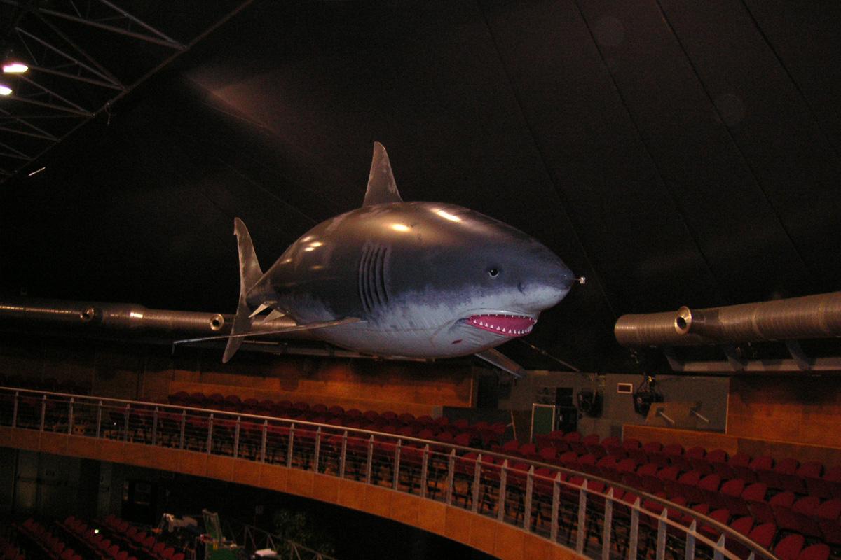 gal_shark_3