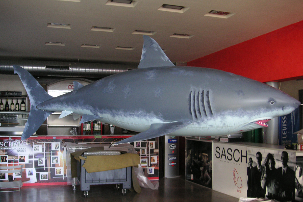 gal_shark_4