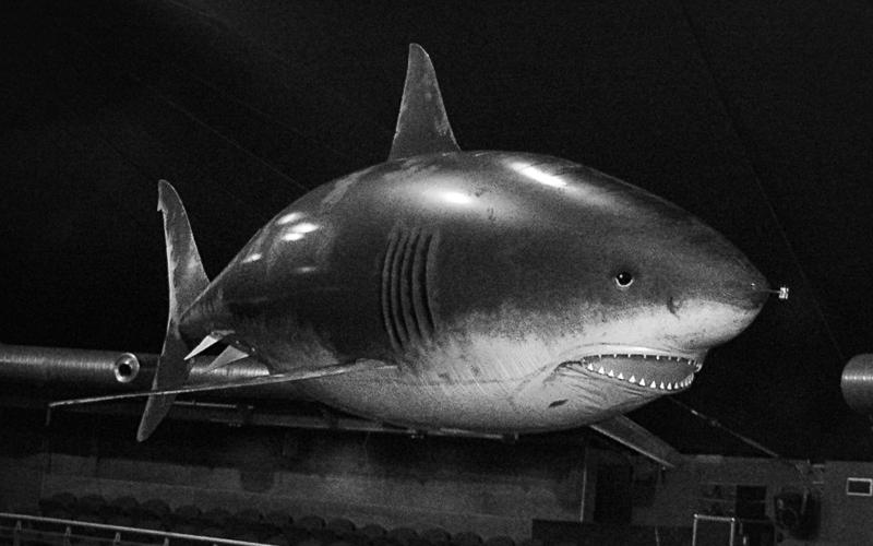 shark_800x500